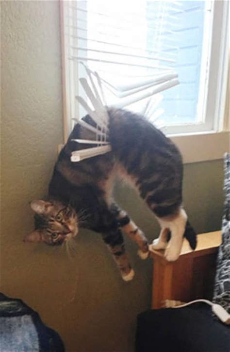 funny animals  dont   mind  theyre stuck