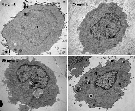 chloroform fraction  scutellaria barbata  don promotes