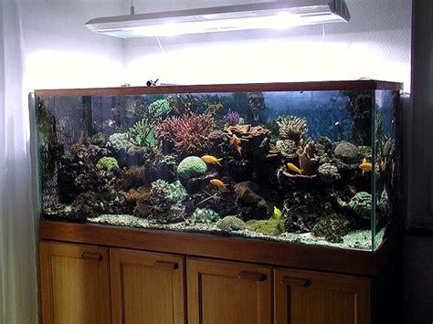 aquarium eau douce chaude