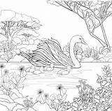 Swan Coloring Pages Adult Printable Bird Swans Colouring Cat Animal Seuss Dr Sheets Books Drawing Princess Jaguar Colour Embroidery Yager sketch template