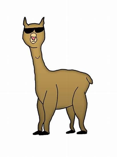 Llama Cartoon Alpaca Drawn Clipart Clip Cartoons