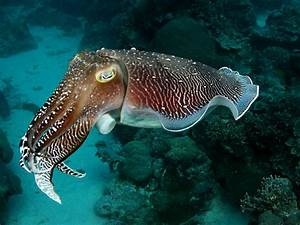 Darwin's Reef Exploration Team [licensed for non ...