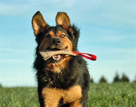 hunde brauchen beschaeftigung tierfreund