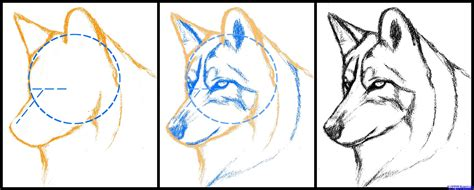 draw  wolf  cool funny