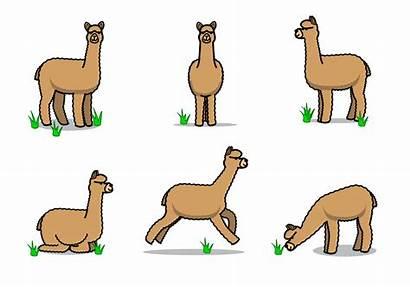 Alpaca Llama Cartoon Clipart Animal Alpaka Transparent