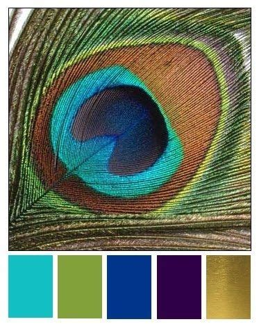 peacock colors colour chart for peacock colours color boards peacock