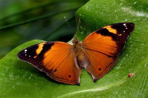 Exotischer Schmetterling (garten Der Schmetterlinge