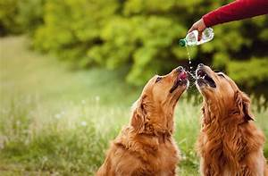 signs of dehydration in your pet what you need to know