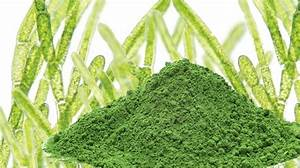 Discover Chlorella Health Benefits To Your Body