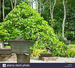Bäume In Kübeln : trees in pots stockfotos trees in pots bilder alamy ~ Lizthompson.info Haus und Dekorationen