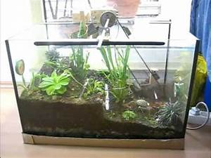 Pflanzen Für Terrarium : terrarium mit bewegung juni 09 youtube ~ Orissabook.com Haus und Dekorationen