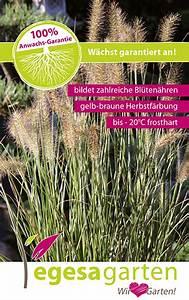 Lampenputzergras Im Kübel : egesa garten gr ser gartencenter kemper ~ Yasmunasinghe.com Haus und Dekorationen