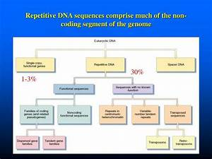 PPT - DNA is made up of subunit building blocks called ...