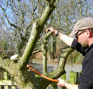 Apple Tree Recovery  U2013 Pruning  U0026 How To Revive An Old Tree