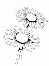 Daisy Coloring Pages Flower Flowers Recommended sketch template