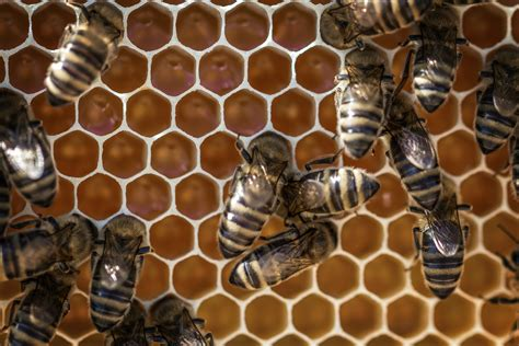 top view  bees putting honey  stock photo