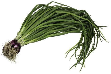 what is a scallion scallion wikipedia