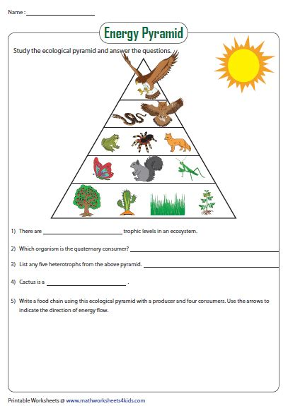 energy pyramid worksheet  images food chain