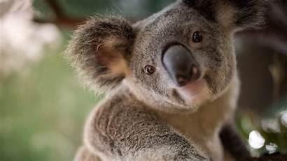 Koala 4k Animal Wallpapers 1080 Ultra 1920