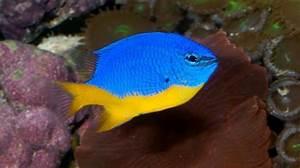 Buy Saltwater Fish Online