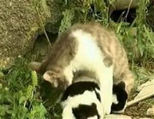 In Georgia cat gave birth to dog | Curious, Funny Photos ...