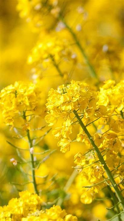 Yellow Nature Wallpapers Iphone Flowers Flower Screen