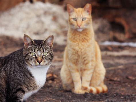 shooting feral cats  caterwauling  iowa town