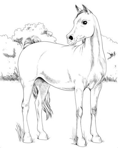 foto de Kolorowanka Koń arabski Kolorowanki dla dzieci do druku