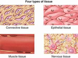 Diagram  Smooth Tissue Diagram Full Version Hd Quality