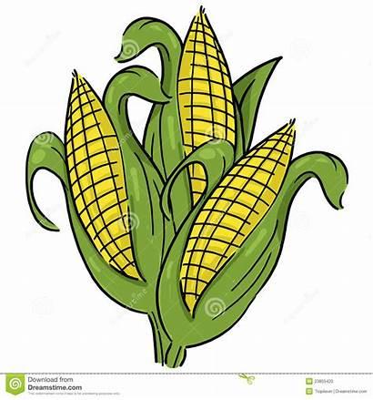 Corn Ear Ears Clipart Cartoon Illustration Clip