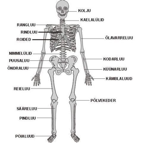 Rinnavähk - vikipeedia, vaba entsüklopeedia