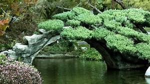 1920x1080px #961854 Japanese Garden (495.02 KB)
