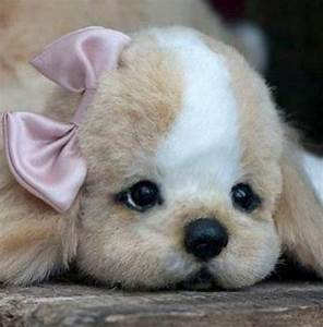 So cute. Little puppy | animals! | Pinterest