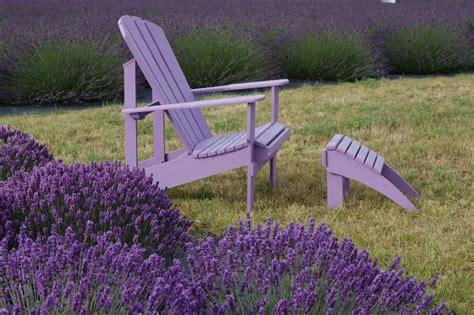 Lavendel Richtig Pflegen by Lavendel Pflege 187 Der Gro 223 E Ratgeber