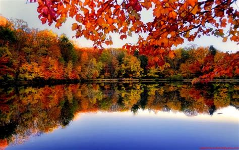 Desktop Autumn Wallpaper by Autumn Forest River Side Wallpapers Autumn Forest River