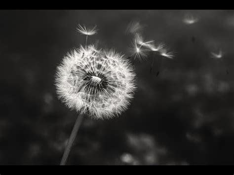 creative photography tips  tricks create