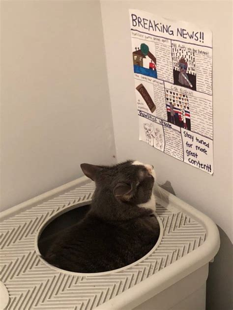 Kid Makes Cat Its Own Newspaper To Read While Its Sitting