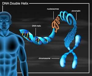 Dna Double Helix Diagram Vector