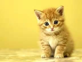 cat free cat picture