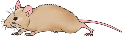 free mouse clip clipart image 11920