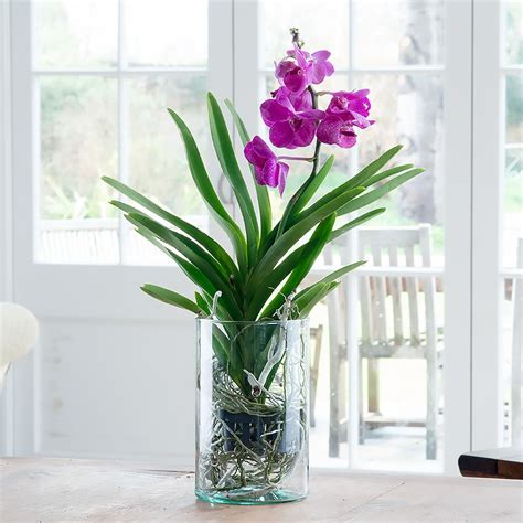 how to get an orchid plant to bloom again appleyard flowers flowers blog florist blog