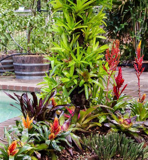 bromeliads australia nursery turn your living bromeliad tree into beautiful artwork better homes and gardens