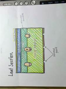 12knights Is A Dp Biology Wiki    911 Draw And Label Plan Diagrams