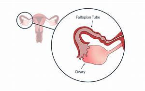 What Happens In Your Body During Ovulation