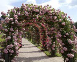 Rosen Für Rosenbogen : rosenbogen bepflanzen und pflegen so wird 39 s gemacht ~ Orissabook.com Haus und Dekorationen