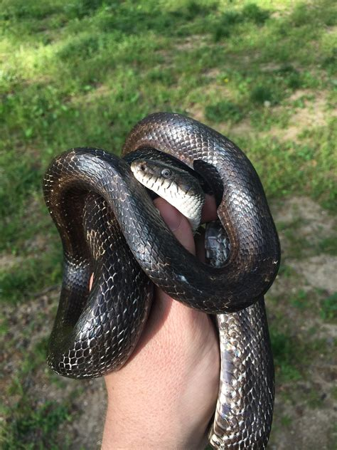 Found this snake today (East TN) but don't know the type ...