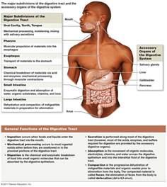 Digestive System Enzymes Diagram