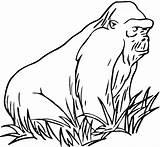 Gorilla Coloring Pages Grass Animals Mountain Zoo Apes Gorillas Printable Clipart Animal Ape Supercoloring Myst Getcoloringpages Coloringbay Categories sketch template