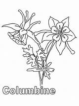 Coloring Columbine Pages Flowers Flower Peony Template Printable Sketch sketch template