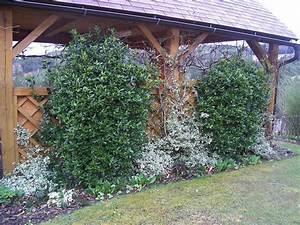Winterharte Bäumchen Für Balkon : gr npflanze f r 50x50 terassentopf seite 1 terrasse balkon mein sch ner garten online ~ Buech-reservation.com Haus und Dekorationen